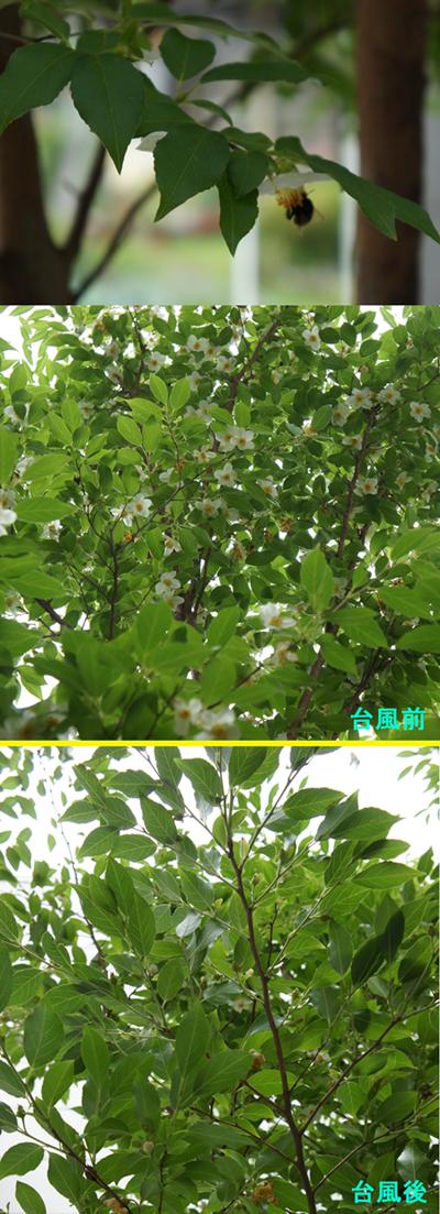 http://evina.biz/bolg/k/20120620dp.jpg