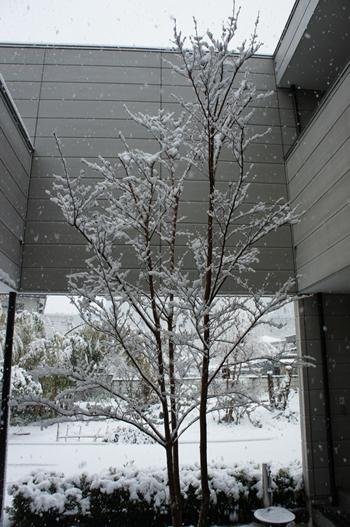 20120229dp.JPGのサムネイル画像